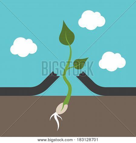Small Plant Breaking Asphalt