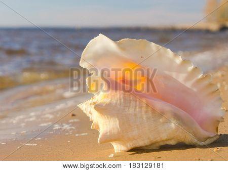 Seascape Divine Beach Treasure