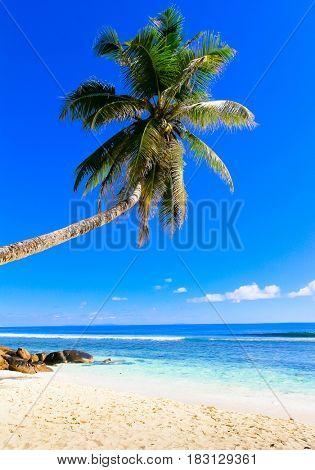 Dream Sea Palm