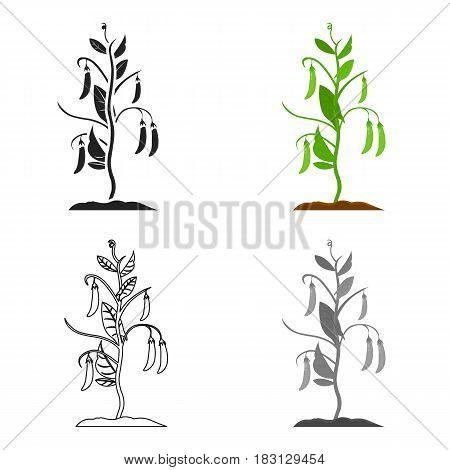 Peas icon cartoon. Single plant icon from the big farm, garden, agriculture cartoon.