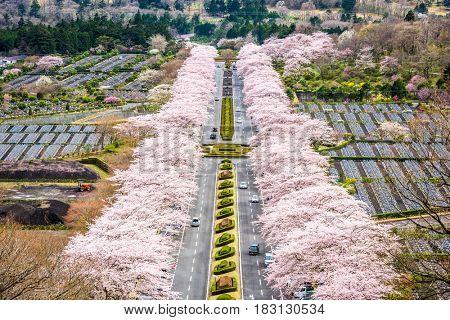 Fuji Reien Cemetery, Shizuoka, Japan in spring.