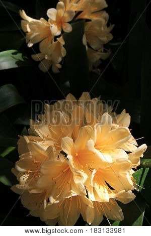 Vertical image of exotic flowers in tropical setting of someone's pretty garden