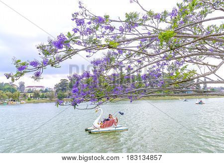 Dalat, Vietnam - March 27th, 2017: Visitors enjoy Jacaranda flowers bloom along Xuan Huong Lake in spring. This place attracts millions of visitors to the annual holiday home of many tropical flowers