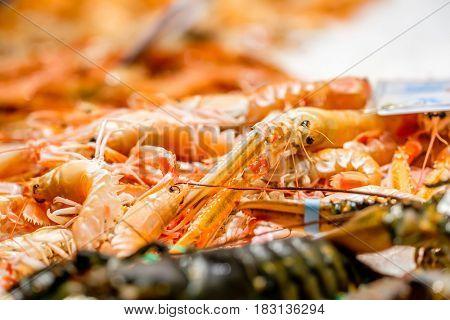 Fresh langoustines at seafood market