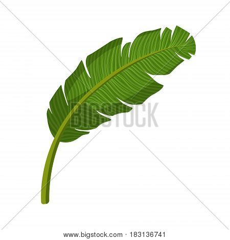 Tropical palm leaf. Colorful cartoon vector Illustration isolated on a white background