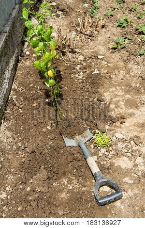 Planting Seedlings With A Shovel