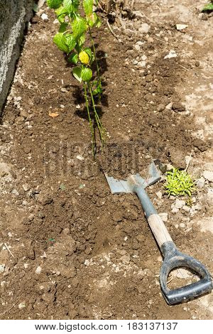 Digging Up The Earth With A Shovel For Seedlings