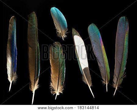 Seven blue and green shiny bird feathers