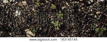 Soil, soil background, soil texture, spring soil. Earth, earth, background, ground texture. Grunge background. Grunge soil.
