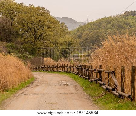 Country road with a wood rail fence leading to a wooded area with lush green trees with golden reeds in foreground.