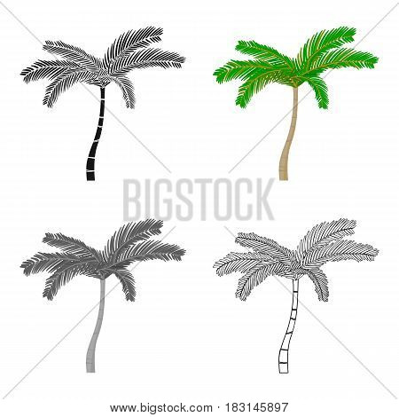 Mexican fan palm icon in cartoon style isolated on white background. Mexico country symbol vector illustration.