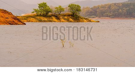 Trees on sandy island in middle of lake with woodland area covered in haze in the background