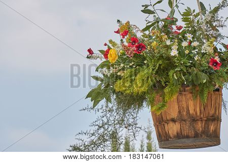 flower in bloom in the hanging wood vat