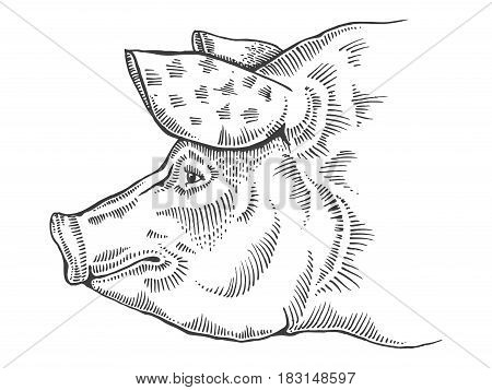 Pig head engraving vector illustration. Scratch board style imitation. Hand drawn image.