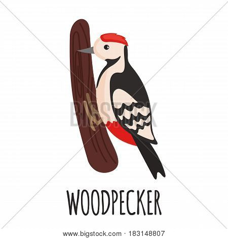 Cute Woodpecker in flat style isolated on white background. Vector illustration. Forest animal. Cartoon Woodpecker.