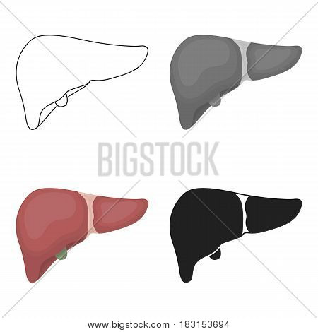 Liver icon in cartoon style isolated on white background. Organs symbol vector illustration.