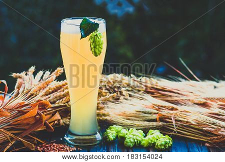 light beer - not filtered malt hops barley ears on the table alcohol blue tone