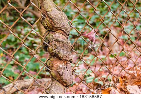The trunk of the tree spouted through wire grid closeup