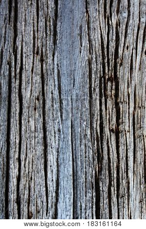 Texture of old wooden board of grey colors