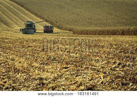 Harvester combine harvesting corn on summer day.