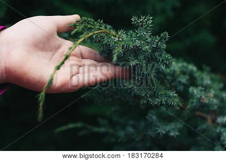 just Close up of girl's fur-tree branches