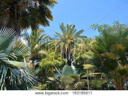Palm trees varieties in Miami Beach Botanical Garden