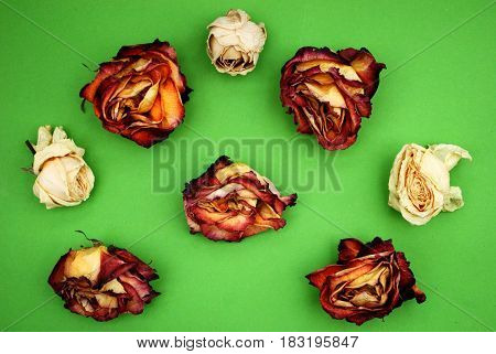 The dry colorfull roses on green background