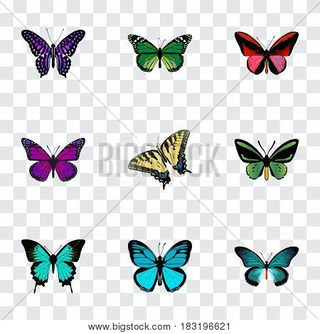 Realistic Polyommatus Icarus, Callicore Cynosura, Copper And Other Vector Elements. Set Of Butterfly Realistic Symbols Also Includes Blue, Green, Tiger Objects.