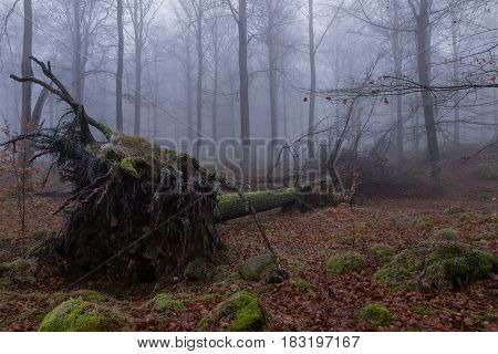 Tree on the ground in the mist