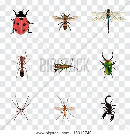 Realistic Locust, Insect, Poisonous And Other Vector Elements. Set Of Animal Realistic Symbols Also Includes Pismire, Gnat, Grasshopper Objects.