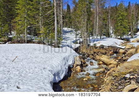 Spring landscape in the forest with brook from melting snow and first yellow coltsfoot flowers (Tussilago farfara) among the stones