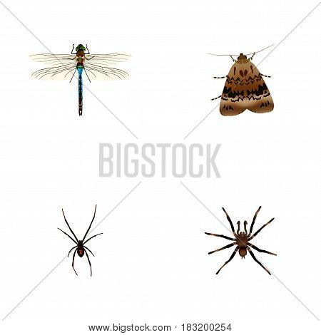 Realistic Arachnid, Spinner, Butterfly And Other Vector Elements. Set Of Animal Realistic Symbols Also Includes Dragonfly, Spinner, Spider Objects.