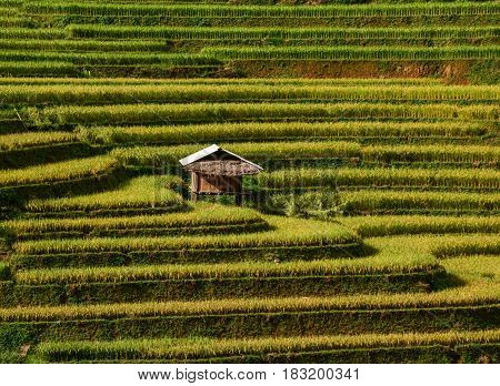 Landscape Of Terraced Rice Field In Northern Vietnam