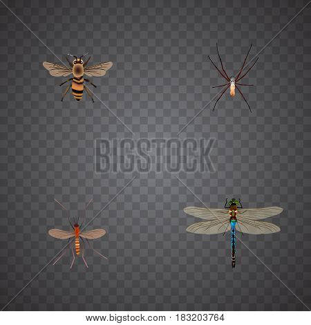 Realistic Spider, Gnat, Wisp And Other Vector Elements. Set Of Animal Realistic Symbols Also Includes Insect, Dragonfly, Alive Objects.