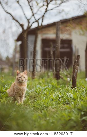 Cute young red cat in garden