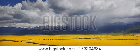 Panorama of the valley of yellow flowers. In the background the mountains of Tibet and thunderclouds.
