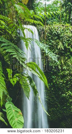 Close up of Waterfall hidden in lush jungle leaves, Bali, Indonesia.