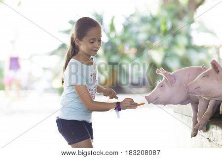 Lovely Girl Feeds Pig