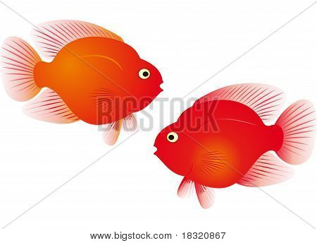 Red Parrot Fish Vector