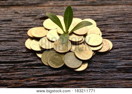 Saving money concept and money coin with tree growing for business