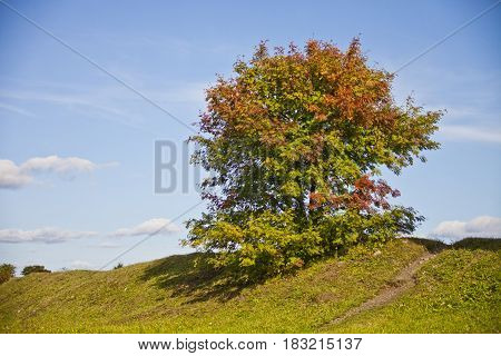 Autumn Russian landscape of Kizhi Island. Rowan tree