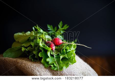 Fresh salad leaves with organic radish and herbs on a black background