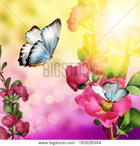 floral background with butterfly and flowers solar flare