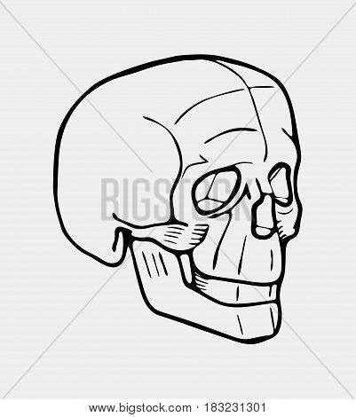 Hand drawn black and white skull. Logo, poster. Stencil or engraved style.