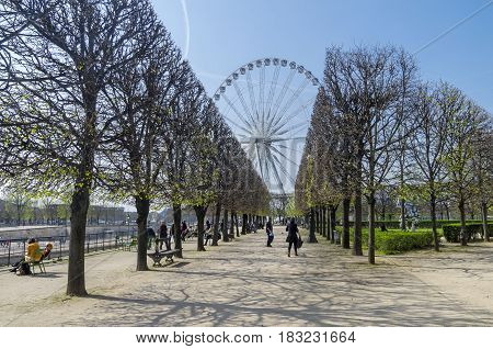 PARIS FRANCE - MARCH 26 2017: Alley in the Tuileries garden on a spring sunny day. Paris France.