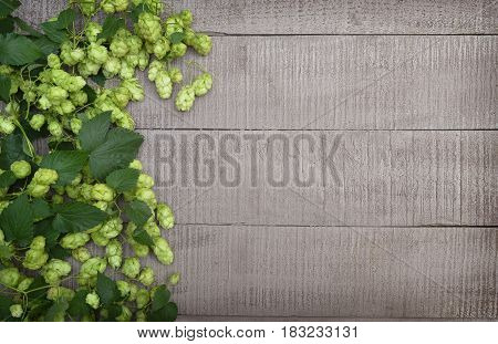 Fresh hops with cones and leaves on a wooden background. Top view. Concept. Brewing. Harvest.