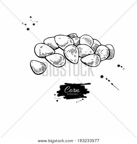 Corn seed heap hand drawn vector illustration. Isolated Vegetable engraved style object. Detailed vegetarian food drawing. Farm market product. Great for menu, label, icon