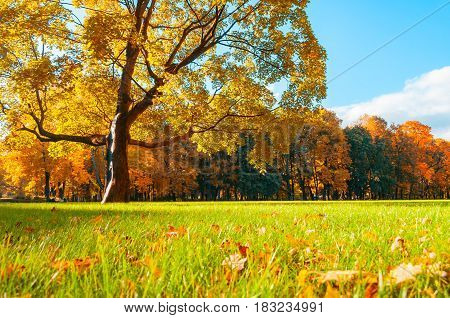 Autumn Colorful Landscape In Sunny Autumn Landscape Park Lit By Sunlight -autumn Park In Soft Sunlig