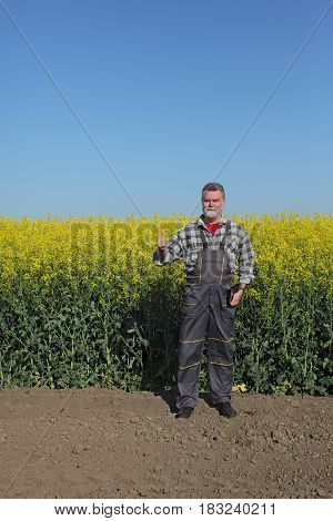 Farmer And Blossoming Rapeseed Field