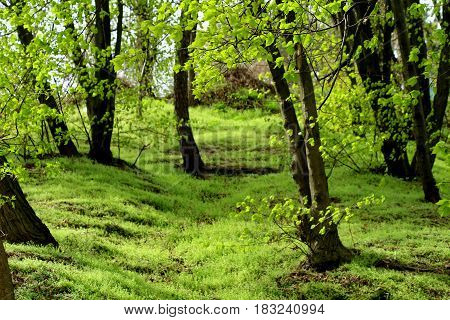 Spring landscape. Spring came, there was young grass, the trees were covered with leaves. Greenery around the soft green color pleases and inspires.
